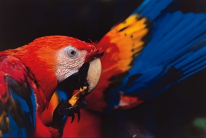 Local delights: macaws